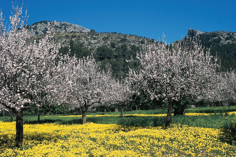 Mallorca in Febrauary