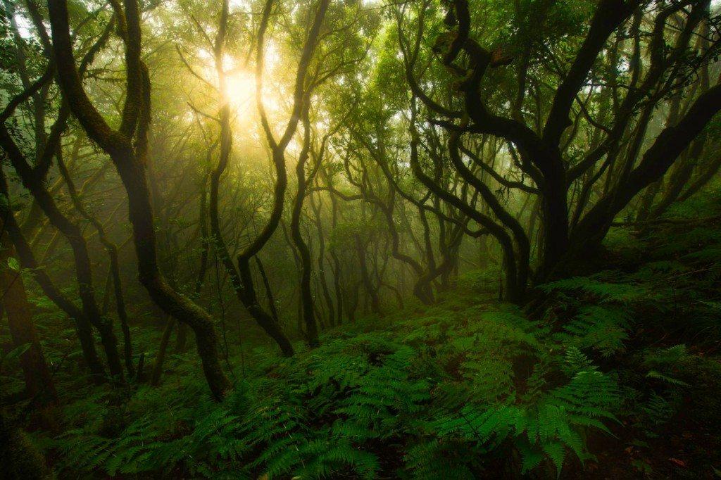 laurisilva forest-anaga-tenerife