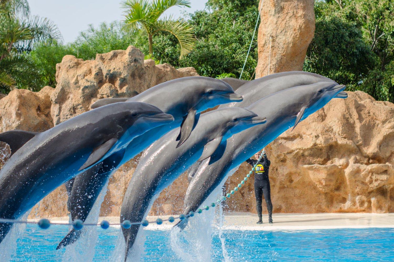Things to do in tenerife the classic blog - Aqua tenerife ...