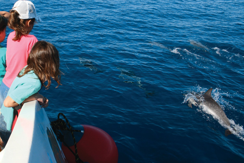Dolphin watching, Algarve