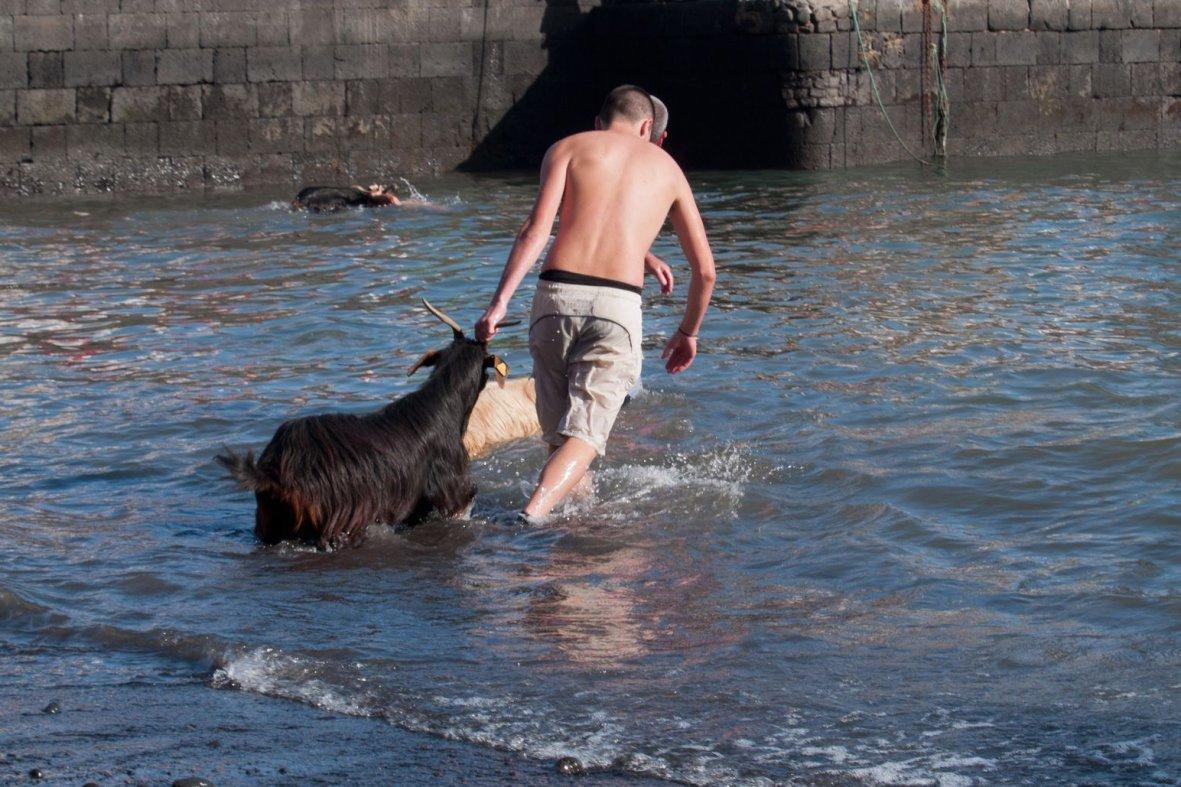 Fiesta de San Juan bathing of goats.