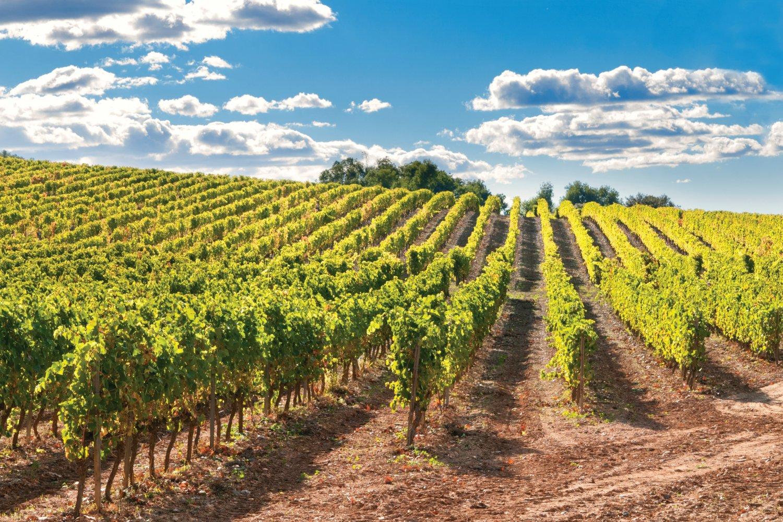 Cava vineyards, costa dorada