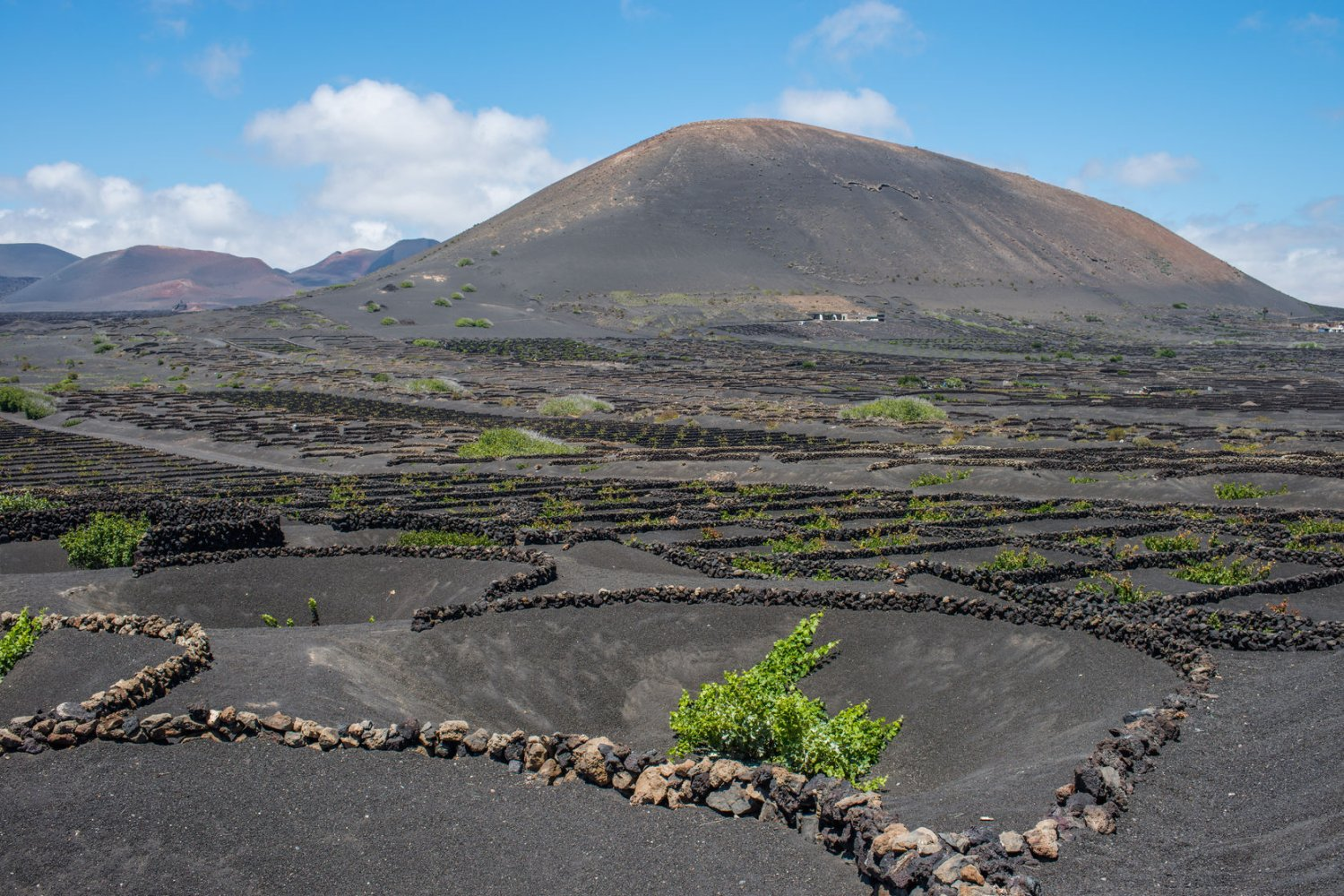 wine tasting holidays in Lanzarote