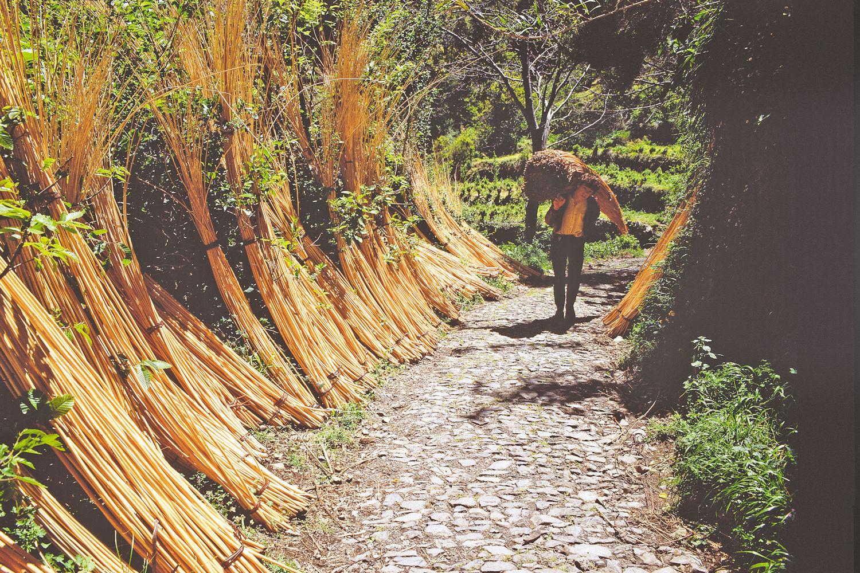 madeira wicker