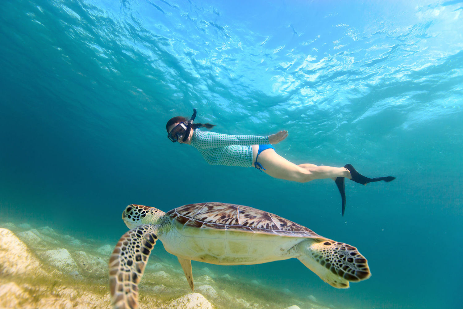 swimming with turtles in barabdos