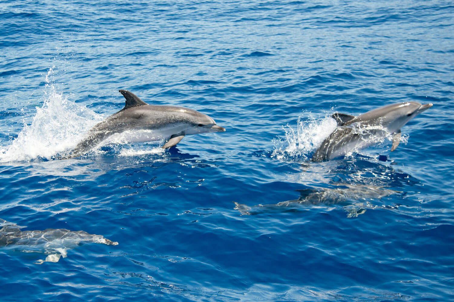 dolphins jumping out of water in La Palma