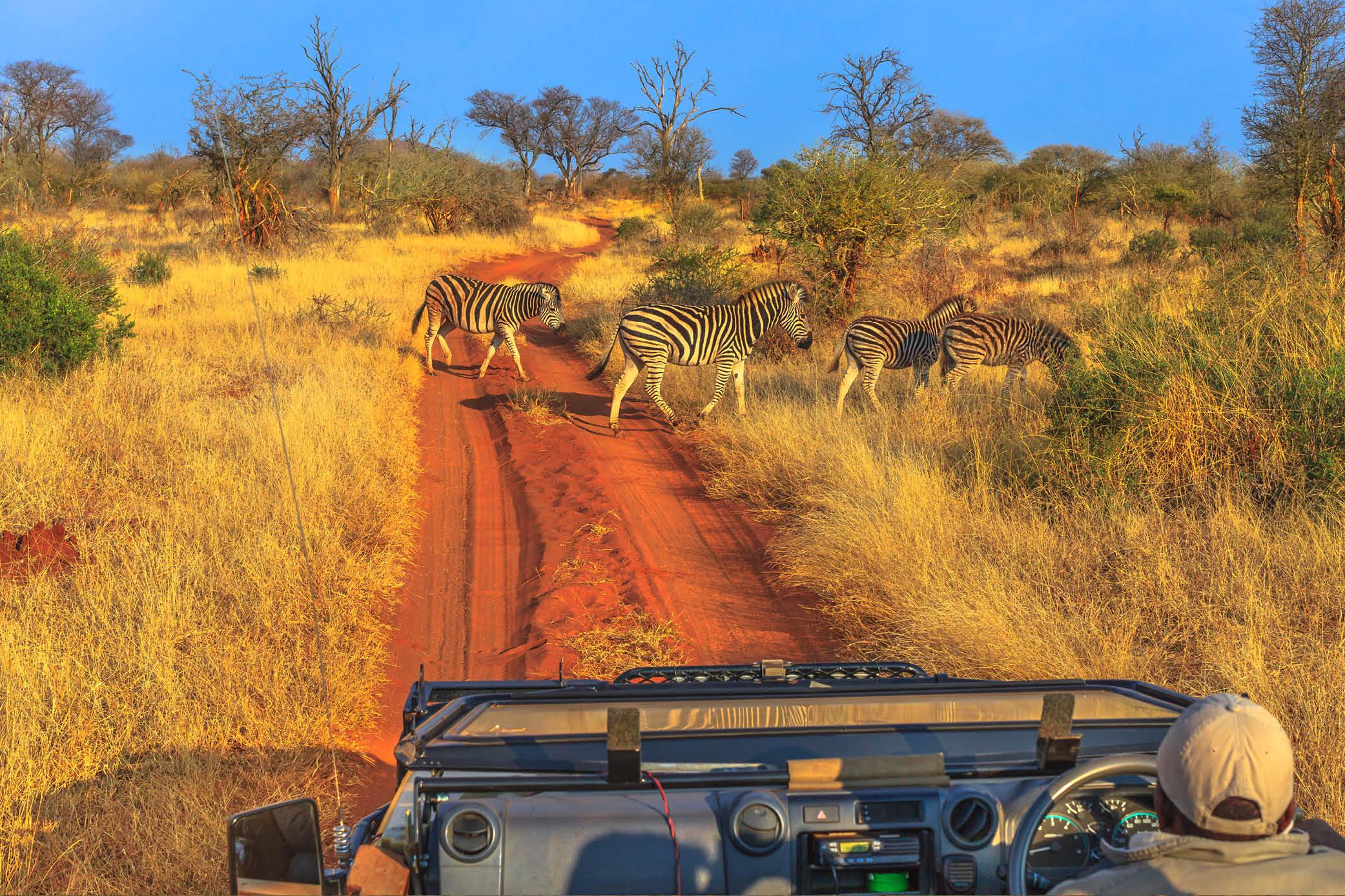 game drive Madikwe south africa