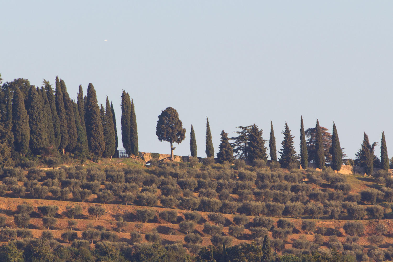Bardolino countryside vineyards