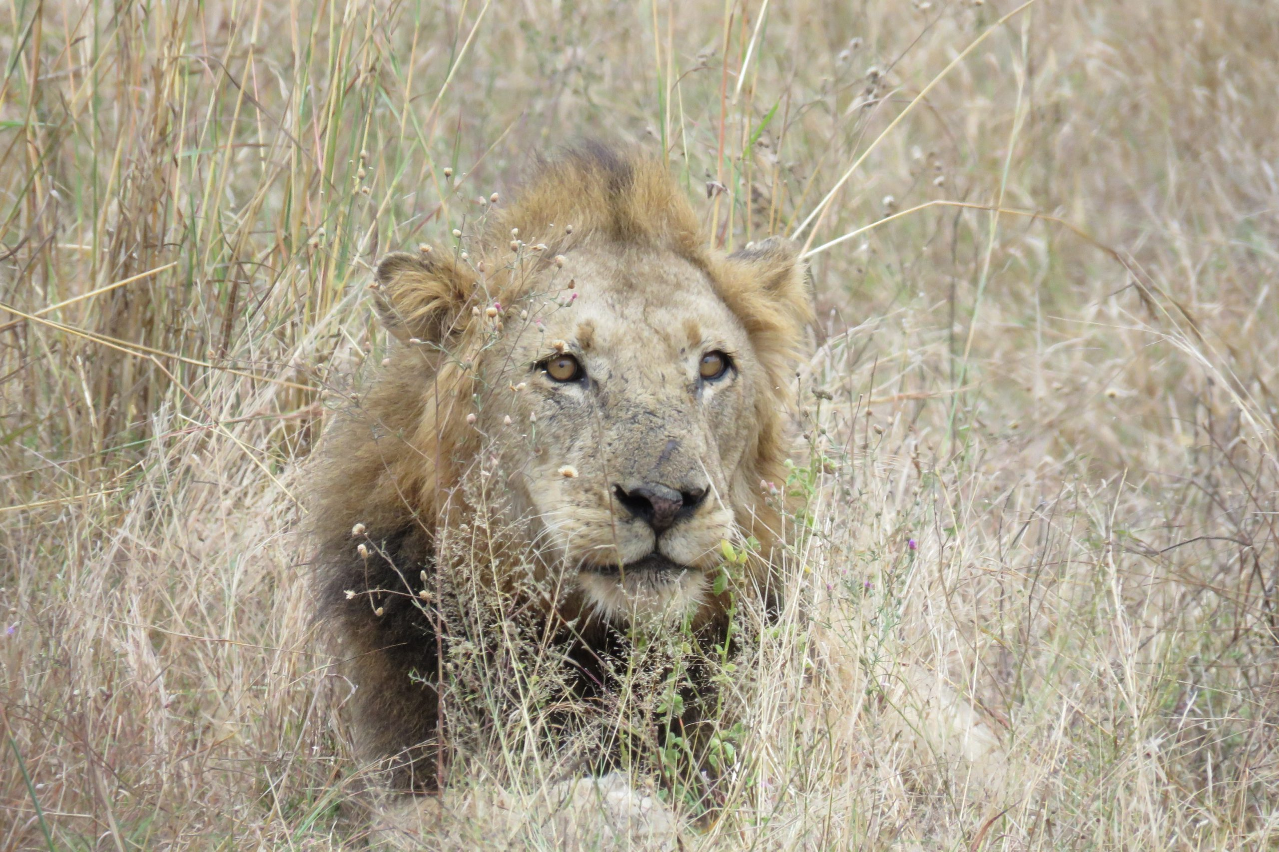 A chance to spot the big five on safari in South Africa